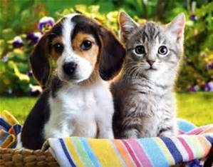 Digital-marketing-for-pet-shops